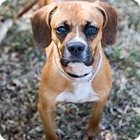 Adopt A Pet :: Pluto - Miami, FL