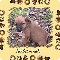 Adopt A Pet :: Timber meet me 6/24 - Manchester, CT