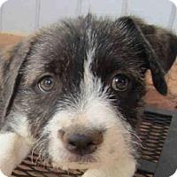 Adopt A Pet :: BAXTER - Murray, UT