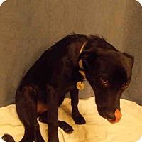 Adopt A Pet :: *KERI - Upper Marlboro, MD