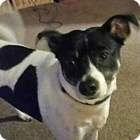 Adopt A Pet :: Mack - Courtesy Posting - Oakhurst, NJ