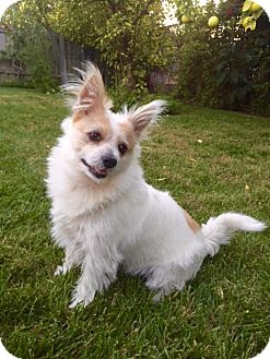 Terrier (Unknown Type, Medium) Mix Dog for adoption in Los Angeles, California - Simon