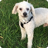 Adopt A Pet :: Spencer - Carlsbad, CA