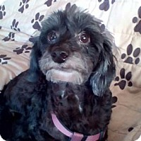 Adopt A Pet :: DESTINY (LM) - Tampa, FL