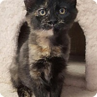 Adopt A Pet :: Autumn - Hollywood, MD