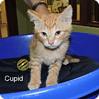 Adopt A Pet :: Cupid - Slidell, LA