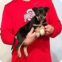 Adopt A Pet :: Trinity - New Philadelphia, OH