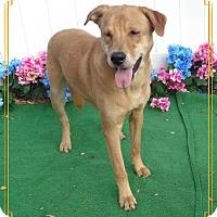 Adopt A Pet :: MYLES- also see MOLLIE - Marietta, GA