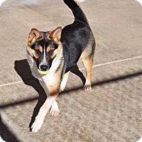 Adopt A Pet :: Hops - Sierra Vista, AZ