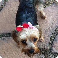 Adopt A Pet :: Zoie - Vidor, TX