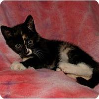 Adopt A Pet :: Iris - Oxford, NY