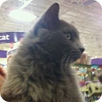Adopt A Pet :: Courage - Modesto, CA