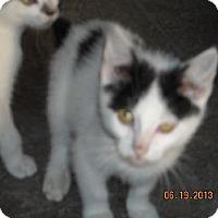 Adopt A Pet :: Taylor - Riverside, RI