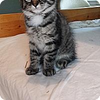Adopt A Pet :: Priscella - Cleveland, OH