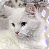 Adopt A Pet :: Inuit - Chicago, IL