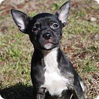 Adopt A Pet :: Lexi - Parker, CO