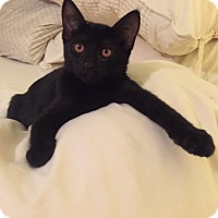 Adopt A Pet :: Finn - Modesto, CA