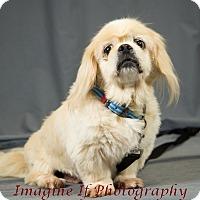 Adopt A Pet :: Arthur - Oklahoma City, OK