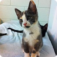 Adopt A Pet :: Zoe - Watkinsville, GA