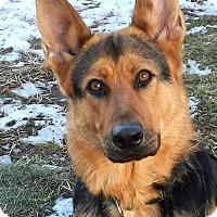 Adopt A Pet :: Sadie - Wayland, MA