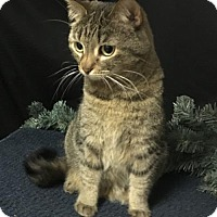 Adopt A Pet :: Mimi - Fayetteville, GA