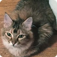 Adopt A Pet :: Jilly - Colorado Springs, CO
