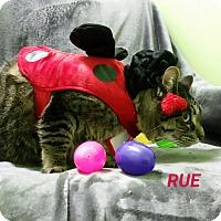 Adopt A Pet :: rue - Muskegon, MI