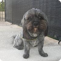 Adopt A Pet :: Marble - Windermere, FL