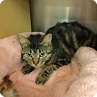 Adopt A Pet :: Mindy - Colmar, PA