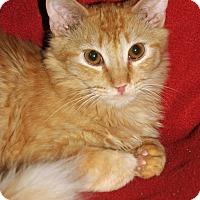 Adopt A Pet :: Justin - Encino, CA