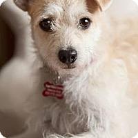 Adopt A Pet :: Precious - Encino, CA