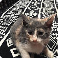 Adopt A Pet :: Princess Leia - Zanesville, OH