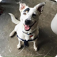 Adopt A Pet :: Charlotte Rae - Jersey City, NJ