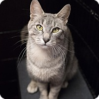 Adopt A Pet :: Praline - Toronto, ON