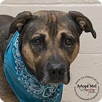 German Shepherd Dog Mix Dog for adoption in Troy, Ohio - Bernard
