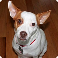 Adopt A Pet :: Jewel (SC) - North Myrtle Beach, SC