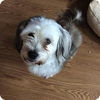 Adopt A Pet :: Buddy - Harrisburg, PA