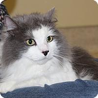 Adopt A Pet :: BABY KITTY - Las Vegas, NV