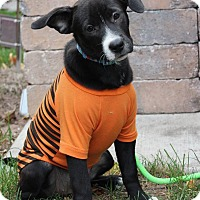 Adopt A Pet :: Lucy Lou - New Oxford, PA