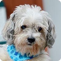 Adopt A Pet :: Jethro - Fairport, NY