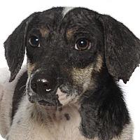Adopt A Pet :: DeCastro - Oakland Park, FL