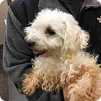 Adopt A Pet :: A027029 - Norman, OK