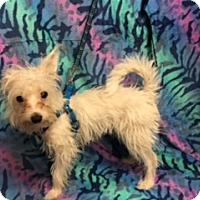 Adopt A Pet :: CRYSTAL - Elk Grove, CA