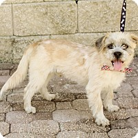 Adopt A Pet :: Marcelo - New York, NY