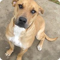 Adopt A Pet :: RUGER - Pilot Point, TX