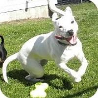 Adopt A Pet :: Monica - Silver Lake, WI