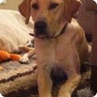Adopt A Pet :: Finn - Lewisville, IN