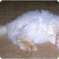 Adopt A Pet :: Cassandra - Beverly Hills, CA
