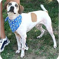 Adopt A Pet :: Mack - Waukesha, WI