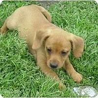 Adopt A Pet :: Digger - Glenpool, OK